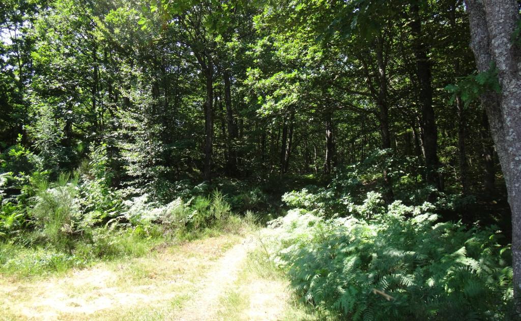 Le parcours en forêt